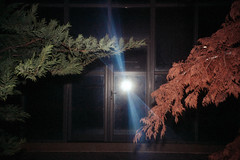 IMG_0285 (dirtyharrry) Tags: color colour tree 35mm canon flash dirty pinhole dirtyharry dirtyharrry kydonakis