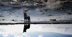 galaad (Emma Plume) Tags: chien mer eau reflet ciel bordercollie nuage paysage ileder rochers algues ocan stemarie littoral retourn