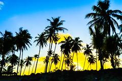 Palms and Sunset (Jorge Hamilton) Tags: bahia brasil brazil praia do forte arco ris rainbow lua luar farol beach moolight jorgehamilton brandao brando