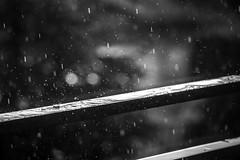 Summer rain (zmonarski.m) Tags: rain summer canon 70d 18135 burst drops raindrops rainy day blackwhite bw bokeh vignette poland polska wrocaw wroclaw