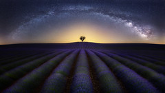 Lavender Under the Stars (Ral Podadera Sanz) Tags: lavander flower purple green stars milkway fields night landscape france valensole panorama panoramic provence wow