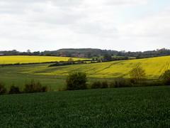 GOC The Pelhams 095: Landscape (Peter O'Connor aka anemoneprojectors) Tags: england field landscape kodak outdoor farm farmland rape crop hertfordshire rapeseed oilseedrape 2016 goc furneuxpelham gayoutdoorclub z981 kodakeasysharez981 gochertfordshire hertfordshiregoc gocthepelhams
