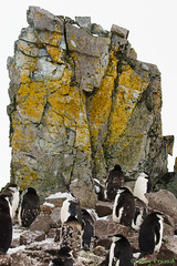_DSC2086 (Roy Prasad) Tags: ocean travel cruise sea mountain snow reflection ice expedition water rock landscape island penguin boat moss ship sony antarctica chick glacier whale lichen orca iceberg zodiac prasad symbiotic colony halfmoon chinstrap symbiosis royprasad halfmoonisalnd
