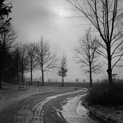 Misty winterday in the small village Baak, The Netherlands (jonasfj) Tags: road street trees winter sun snow signs tree 120 6x6 ice rural mediumformat bench alley cloudy kodak tmax january thenetherlands d76 hasselblad epson 100 13 cf intothesun 128 80mm kodaktmax100 v700 baak silverfast 503cx hasselblad503cx 17min epsonperfectionv700photo 8028cf silverfast8seplus d761317min