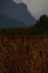 Pitt Meadows BC (Ian Threlkeld) Tags: mist canada mountains nature fog landscape nikon scenery flickr bc rainy pacificnorthwest layers westcoast pnw irt naturephotography pittmeadows scenicbc nikonphotography d7000 mynikonlife