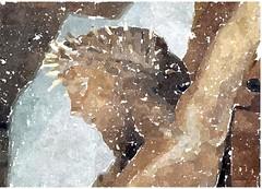O Jesu, Gotteslamm, wie gro ist unsre Schuld (amras_de) Tags: nebel jesus kirche frise nordsee isa friesland protestant jess jesuschrist jezus stclemens isus amrum ges frisia evangelisch jesuschristus jekristus jeesus iesus jzus jesuschristo jesuskristus jezuschrystus gescristu jessdenazaret freesland fraschlnj jsusdenazareth jezuskristus frsia frizija friisia groterfriesland jesusnazaretekoa jesuokristo chessdenazaret jessdenatzaret osacrost jesusvannasaret jesusvunnazaret jsus isusdinnazaret jeikristus fryzjafrysln