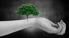 Growth (shicoles) Tags: white black color colour tree green texture out hand arm skin grunge roots growth veins growing