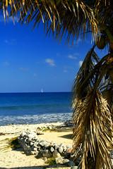 IMG_6027 (PicNic Cards) Tags: ocean waves caves palmtrees caribbean caymanbrac