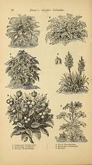 n79_w1150 (BioDivLibrary) Tags: flowers gardening seeds catalogs nurserystock henryadreerfirm usdepartmentofagriculturenationalagriculturallibrary bhlgardenstories internetresource bhl:page=43857333 dc:identifier=httpbiodiversitylibraryorgpage43857333