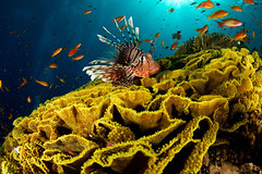 Underwater sea creatures and other animals Wallpapers | SEA LIFE Adventure Backgrounds - Part 3 (PhotographyPLUS) Tags: pictures graphics photos illustrations images stockphotos articles footage stockimage freephoto stockphotograph