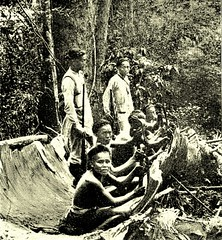 stripping camphor chips from the tree 1912 (SSAVE w/ over 5 MILLION views THX) Tags: taiwan 1912 guards formosa chipping camphor japaneseoccupation aboriginewomen makingcamphor camphorwoodchips