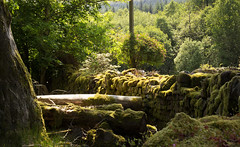 Brecon Beacons (jillallden) Tags: brecon beacons wales woodland nature forest green dappled secluded fantasy