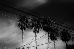 Untitled (ajkpix) Tags: california trees sky urban bw clouds los angeles palm wires