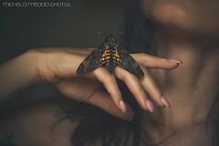 Acherontia (Self Portrait) (Michela Medda) Tags: portrait self insect dead hand moth di autoritratto sfinge morto testa atropos falena acherontia
