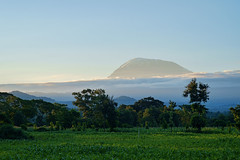 Mount Kilimanjaro (zanettifoto) Tags: schnee kilimanjaro abend sonnenuntergang nebel himmel wald moshi baum abendsonne tansania regenwald grashalm kilimandscharo tza