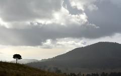 Muckleewee Mountain (dustaway) Tags: trees winter clouds landscape cloudy australia hills nsw australianlandscape cloudscape northernrivers richmondvalley backcreekvalley muckleeweemountain