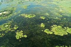 15-09-20 Ruta Okavango Botswana (114) R01 (Nikobo3) Tags: travel parque paisajes naturaleza color canon ngc delta unesco viajes botswana okavango vuelo twop frica vidasalvaje g7x omot deltadelokavango flickrtravelaward canong7x nikobo josgarcacobo todosloscomentarios
