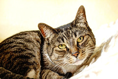 Jenny (vampire-carmen) Tags: portrait cat germany bayern deutschland bavaria eyes kat chat europe jenny ojos gato alemania katze mace augen 猫 gatto חתול hdr kot cham kass 貓 oberpfalz kato kissa katse köttur mačka kucing pusa saka گربه 고양이 кот katu katė γάτα miv pusi kaķis iring gattu мачка котка popoki मांजर pisică قط katsi ngeru კატა կատու pişik qattus പൂച്ച बिल्ली pisîk بلي муур קאַץ बिरालो বিড়াল ಬೆಕ್ಕು canoneos600d ድመት мысық બિલાડી мышык ਬਿੱਲੀ پيشو mphaka ကွောငျ