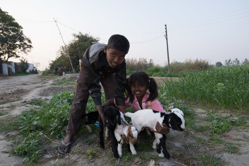 The workers kids and their goats