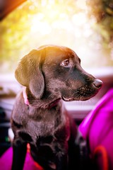 (fotograefin81) Tags: family sunset people usa dog baby snow newyork love nature girl fashion animal closeup canon hair landscape photography labrador child adorable pregnant teen newborn liebe available loght