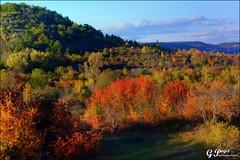 BEAUMONT, LA FORT DE LA CHTAIGNERAIE (Gilles Poyet photographies) Tags: nature automne soe fort auvergne beaumont puydedme autofocus lachtaigneraie aplusphoto artofimages