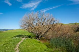 Pond Trail at Tolay Lake Regional Park