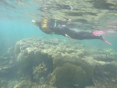 Jess qui snorkel