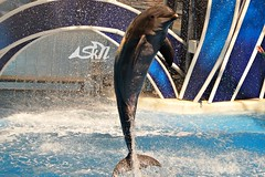 Higher (snewton.8066) Tags: ocean water marine dolphin dolphins whale whales orca seaworld orcas