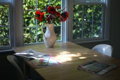 Jeszcze zywa natura z gazetami (syfon) Tags: flowers sun window table burlingame kwiaty stol okno