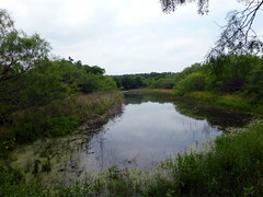 pond #2_50631 (San Marcos Greenbelt Alliance) Tags: flowercloseups ringtailridge sanmarcosgreenbeltalliance smgaphotobylancejones