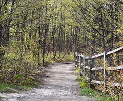 The Path to the Ledge (Lance624) Tags: park flowers trees newyork walking spring path upstate dirt railing