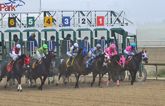 2016-01-08 (35) r2 #5 left at the gate (JLeeFleenor) Tags: photos photography md marylandracing marylandhorseracing jockey   jinete  dokej jocheu  jquei okej kilparatsastaja rennreiter fantino    jokey ngi horses thoroughbreds equine equestrian cheval cavalo cavallo cavall caballo pferd paard perd hevonen hest hestur cal kon konj beygir capall ceffyl cuddy yarraman faras alogo soos kuda uma pfeerd koin    hst     ko  start gate outside outdoors laurelpark maryland