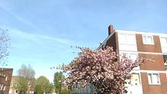 islington spring (r0sejam) Tags: sky london architecture spring flora islington 2016