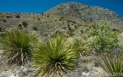 Guadalupe Mountains National Park   Texas (keithhull) Tags: guadalupemountainsnationalpark guadalupemountains texas landscape desert unitedstates explore