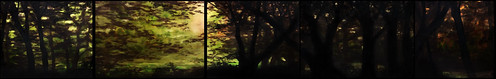"forest-250-40 <a style=""margin-left:10px; font-size:0.8em;"" href=""http://www.flickr.com/photos/120157912@N02/26968394132/"" target=""_blank"">@flickr</a>"