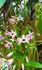 20150821_125157 - Cópia (Megaolhar) Tags: flores toy flickr do dia vale paulo apa bom inverno são campos facebook tuka jordão paraíba fazendinha 2016 youtube ibama twitter jardinagem bioma gomeral