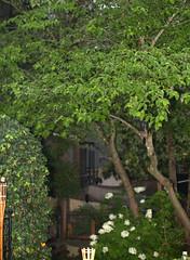 IMG_8684.CR2 (jalexartis) Tags: trees rain spring gloomy calm rainy reflective gloom ilikerain ilikegloomy