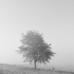 * (sedregh (on/off)) Tags: mist tree fog landscape nebel landschaft baum