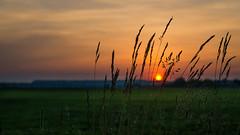 sun goin' down on me... (PhillymanPete) Tags: sunset summer sky orange sun green philadelphia nature beauty grass landscape us nikon poetry unitedstates pennsylvania d7000