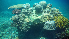 Snorkeling on Philippines with a smartphone in a dry case (Twilight Tea) Tags: underwater philippines samsung snorkeling april snorkelling elnido palawan 2016 underwatercase taoexpedition httptaophilippinescom