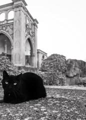 Custode (Daydreaming) Tags: blackandwhite bw italy pet animals cat eyes feline italia amphitheatre occhi felino gatto nero puglia guardian lecce anfiteatro apulia custodian custode iphoneography