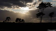 Strabrechtse Heide (dorsman1970) Tags: natuur wolken lucht zon brabant heide landschap strabrechtseheide voorjaar staatsbosbeheer