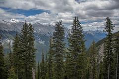 Sulphur Mountain Trees (alpeace89) Tags: trees sky mountain canada forest rockies alberta banff sulphur