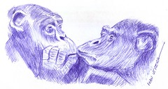 chimpances a lapicero (ivanutrera) Tags: wild animal pen sketch drawing wildlife sketching draw dibujo lapicero boligrafo chimpanc dibujoalapicero dibujoenboligrafo