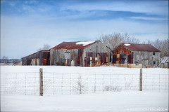 Rural delight... (KvonK) Tags: winter snow barn rural fence march rust outbuildings 2015 barnboard kvonk