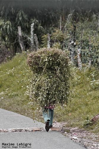 Bush Man del Lago Atitlan - Guatemala