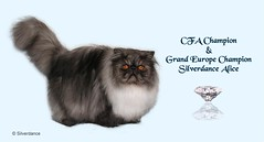 2 (373) (CATS - DOGS) Tags: pet cat kitten quote kittens brochures brochure kedi afi yabrukedi