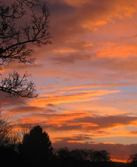 Painted Sunset (Dave Roberts3) Tags: sunset sky tree silhouette wales clouds landscape evening ngc npc newport gwent coth citrit naturethroughthelens coth5
