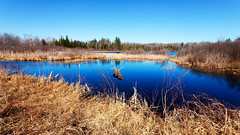 Withey Lake late afternoon April 2015 (hz536n/George Thomas) Tags: copyright lake water spring michigan april canon5d upnorth 2015 withey labcolor ef1740mmf4lusm ogemawcounty cs5