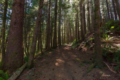 (rainbow wasabi) Tags: trees brown green nature forest landscape woods day walk sunny trail